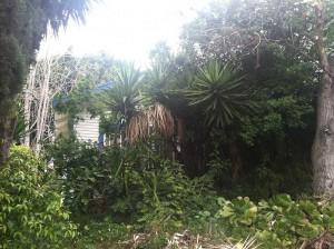 Hoarder Home - Overgrown Vegetation